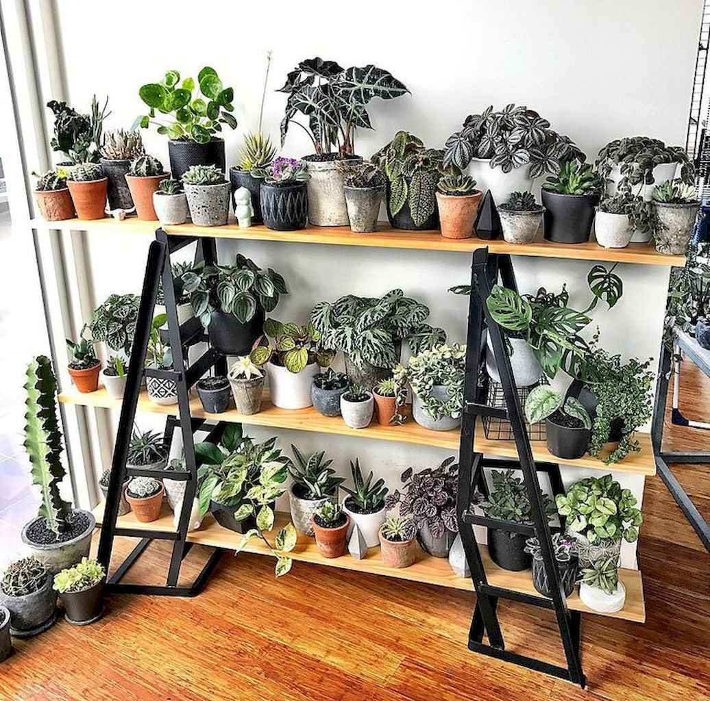 55 greeny indoor plants ideas that will purify your room's air (48)