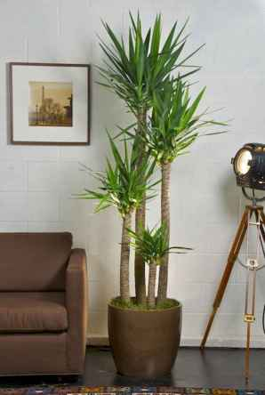 55 greeny indoor plants ideas that will purify your room's air (53)