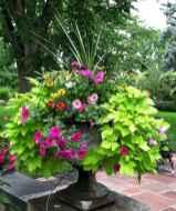 Best summer container garden ideas 56