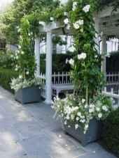 Best summer container garden ideas 9