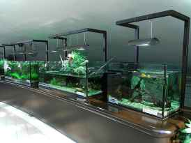 Relaxing aquascaping ideas for inspiration 21