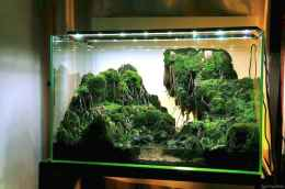 Relaxing aquascaping ideas for inspiration 24