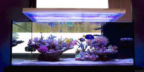 Relaxing aquascaping ideas for inspiration 26