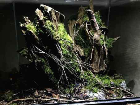 Relaxing aquascaping ideas for inspiration 31