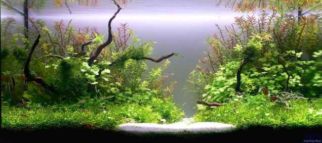 Relaxing aquascaping ideas for inspiration 36