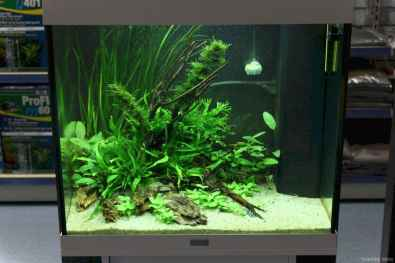 Relaxing aquascaping ideas for inspiration 38