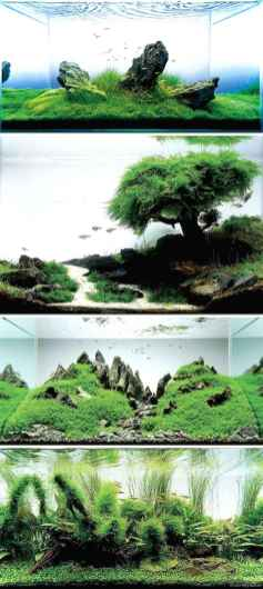 Relaxing aquascaping ideas for inspiration 39