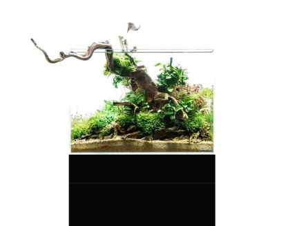 Relaxing aquascaping ideas for inspiration 8