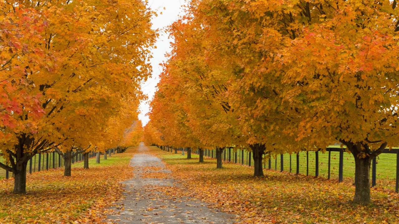 Autumn Falling Leaves Live Wallpaper 16 Great Places To Admire Fall Foliage