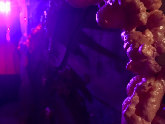In-game: A strange purple glowing passageway.