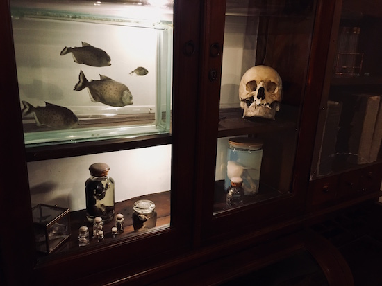 In-game: A science classroom display with preserved animals and a human skull.