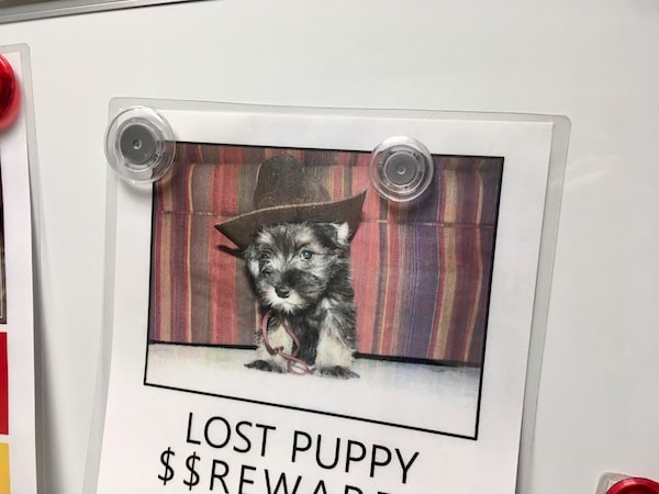 In-game: an advertisement offering a reward for a lost puppy.