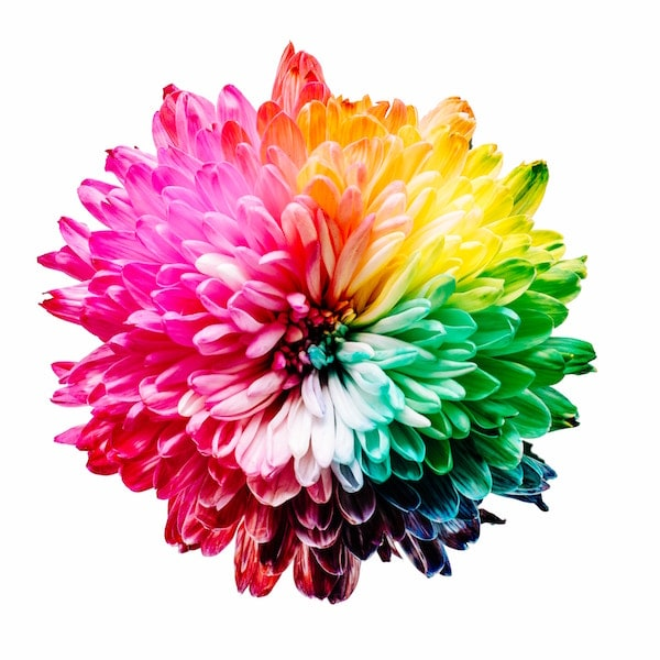 A flower depicting the color spectrum in normal vision