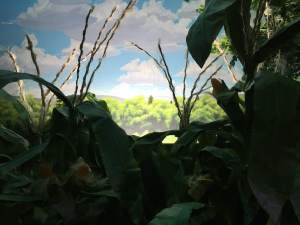 In-game: A view of the sunrise beyond a corn garden.