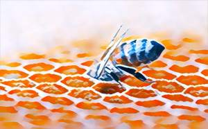 A honey bee diving into a honeycomb.
