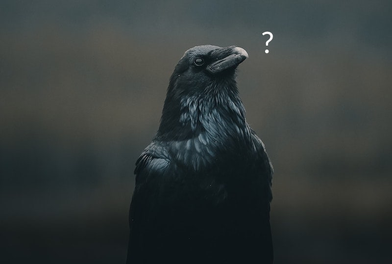 A crow gazing at a question mark.