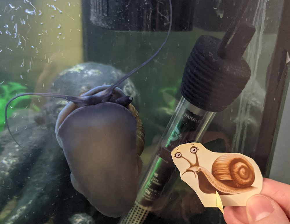 A little snail character being held up in front of an aquarium.