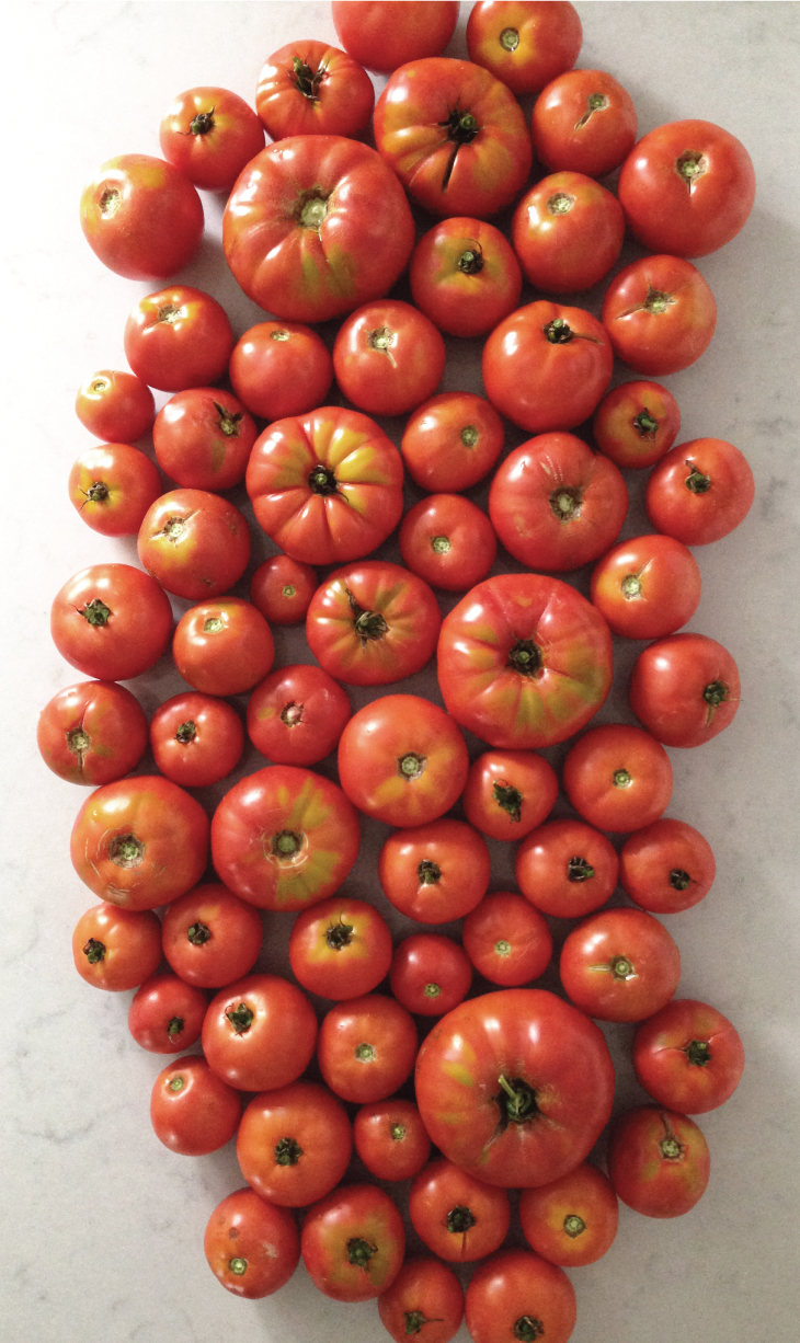 rft_tomatoes1