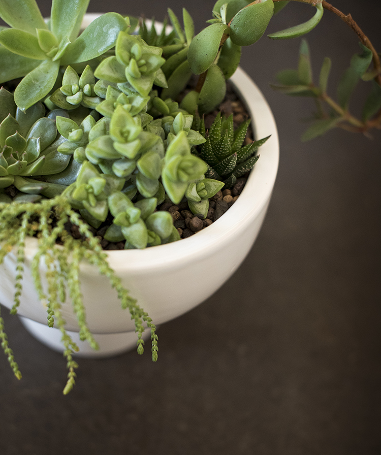 succulents-in-a-pedestal-planter