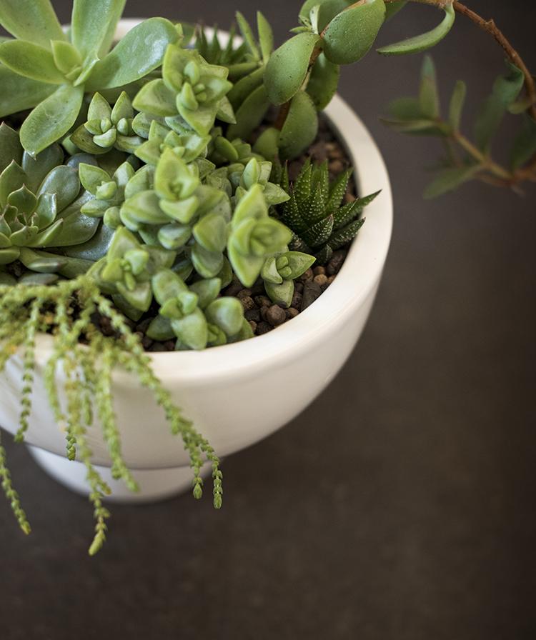 succulents-in-a-pedestal-planter