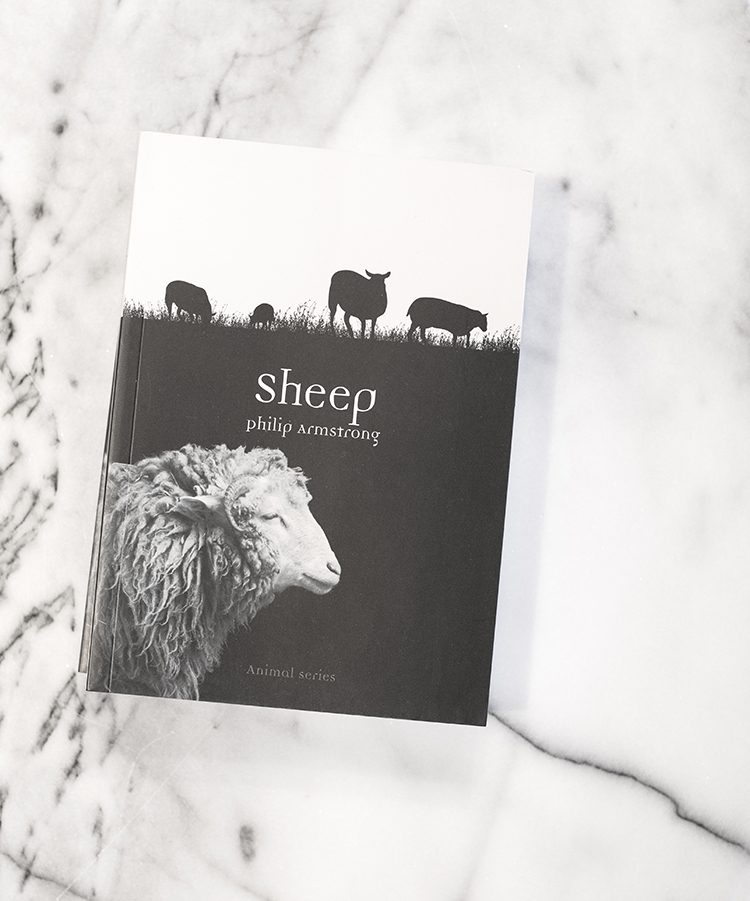 All About Sheep Book
