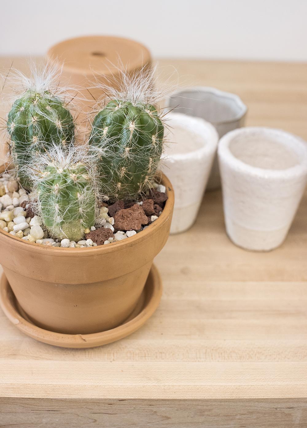 Etsy Cacti