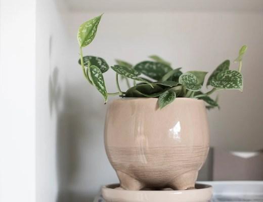 Amazon pronalazi: Sadilice za proljeće - roomfortuesday.com