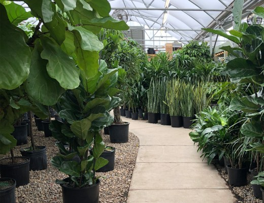 Favorite House Plants for 2020 - roomfortuesday.com