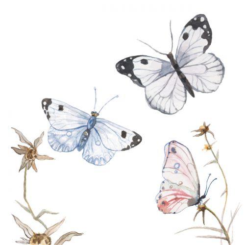 mariposas-blog-02