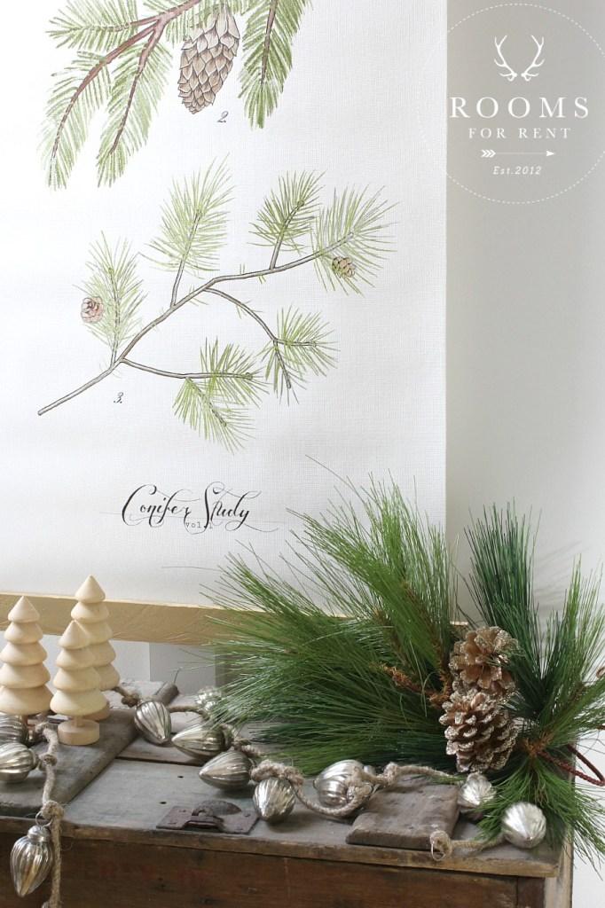 conifer vignette close up