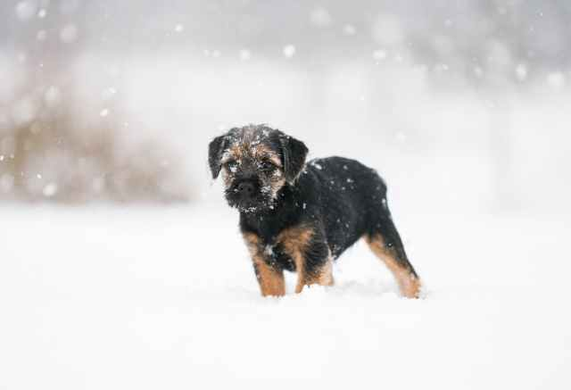 photo of puppy on snow