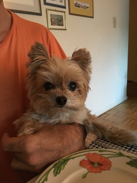 Now, A Small Dog Dies. The Toll Still Climbs While PSD Fails To Act