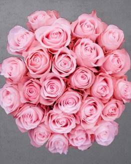 25 roosi