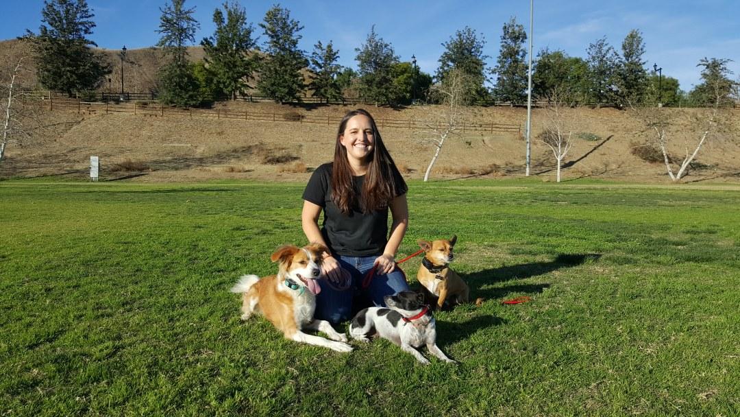 Rooted Dog Training Blog