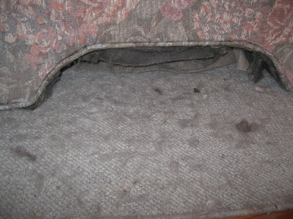 Just a thick layer of cat fur covering every cloth surface in the living room.  Seems legit.