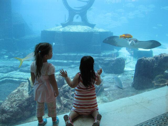 The free aquarium at the Atlantis Resort in Nassau Bahamas. Manta ray!