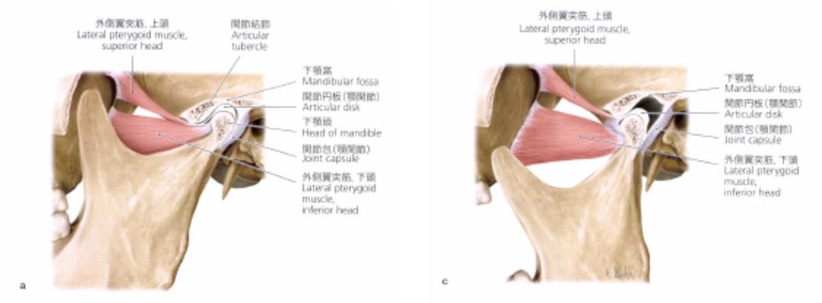 仙台市青葉区の整体で顎関節症に筋膜を治療するポイント