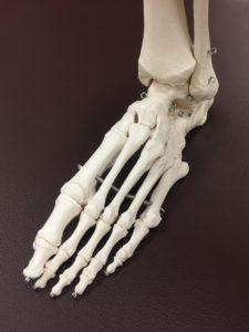 足の骨とインソール