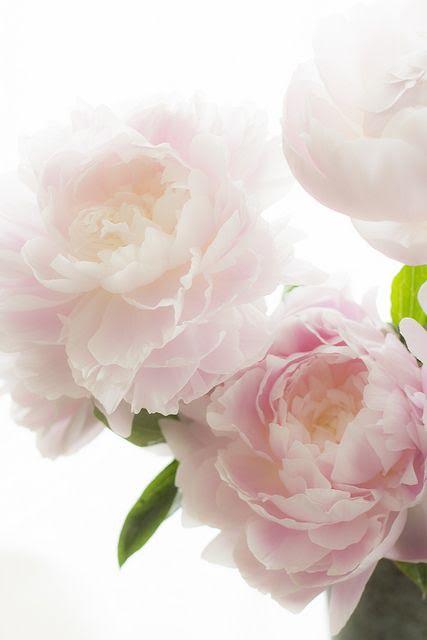 Peonies Flower Bouquet