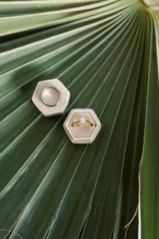 rings in taupe ring box on tropical greenery