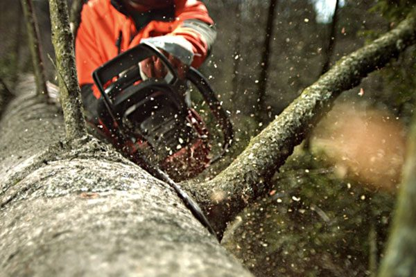 tree limbing in millbrook