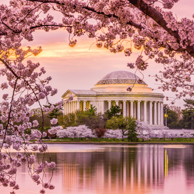 Cherry Blossoms in the USA