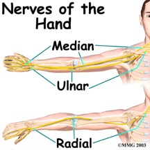 Shibari safety, anatomy of the hand. Nerves of the hand