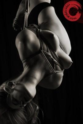 Inverted suspension bondage, futomomo, takatakote.