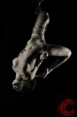Shibari, bondage, suspension, inversion, futomomo