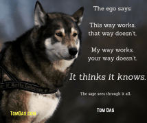 the-sage-sees-through-it-all2