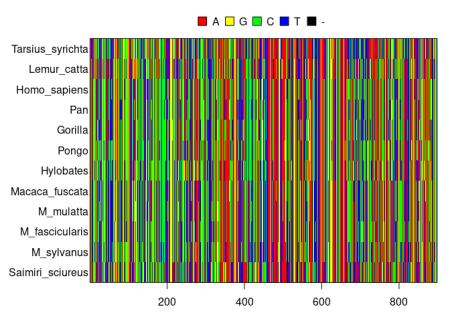 DNA alignment of primates