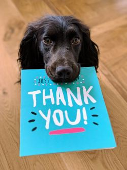 black dog holding card that says thank you