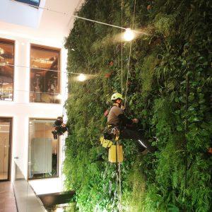 Google entretien mur végétal