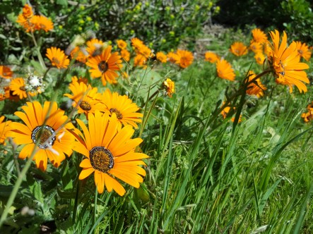 Postberg flowers-114700